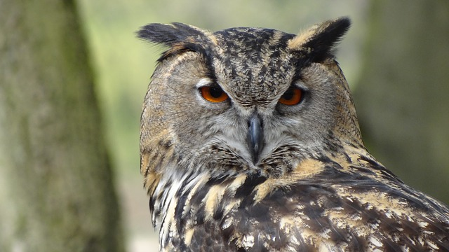 besoin-animaux-hibou